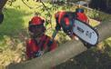 Cl Pole-Mounted Powered Pruner GE-LC 18 Li T-Solo Einsatzbild 1