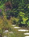 Foarfeca iarba si gard viu fara fir GC-CG 3,6 Li WT Einsatzbild 1