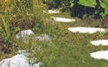 Akku-Gras- und Strauchschere GC-CG 3,6 Li Einsatzbild 1